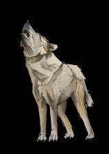 Wolf5+